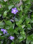 玄関先の花3